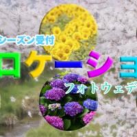 花ロケーション撮影