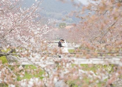 一の坂川の桜