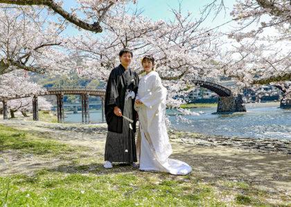 錦帯橋川岸の満開の桜の下の和装新郎新婦